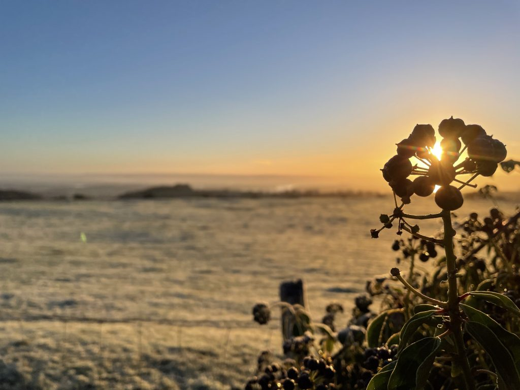 Sun rise behind a silhoutted flower in front of a frosty field