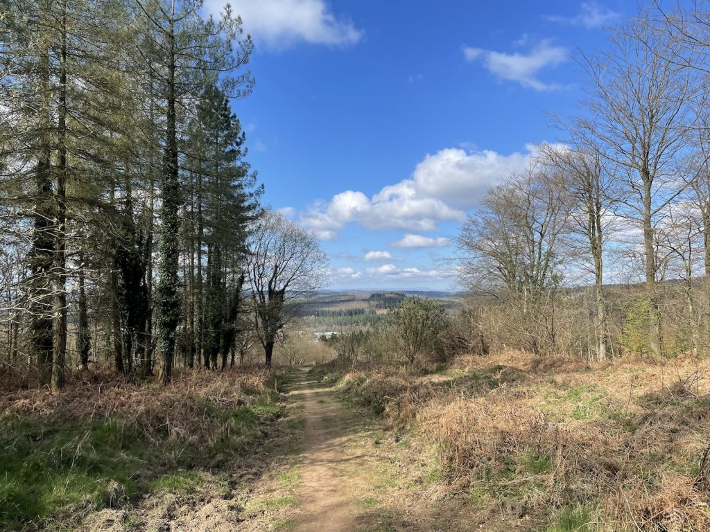 Blue skies with white fluffy clouds above a path through the forest looking down to Cinderford in the valley below.